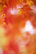 Autumnleavesjpg_2